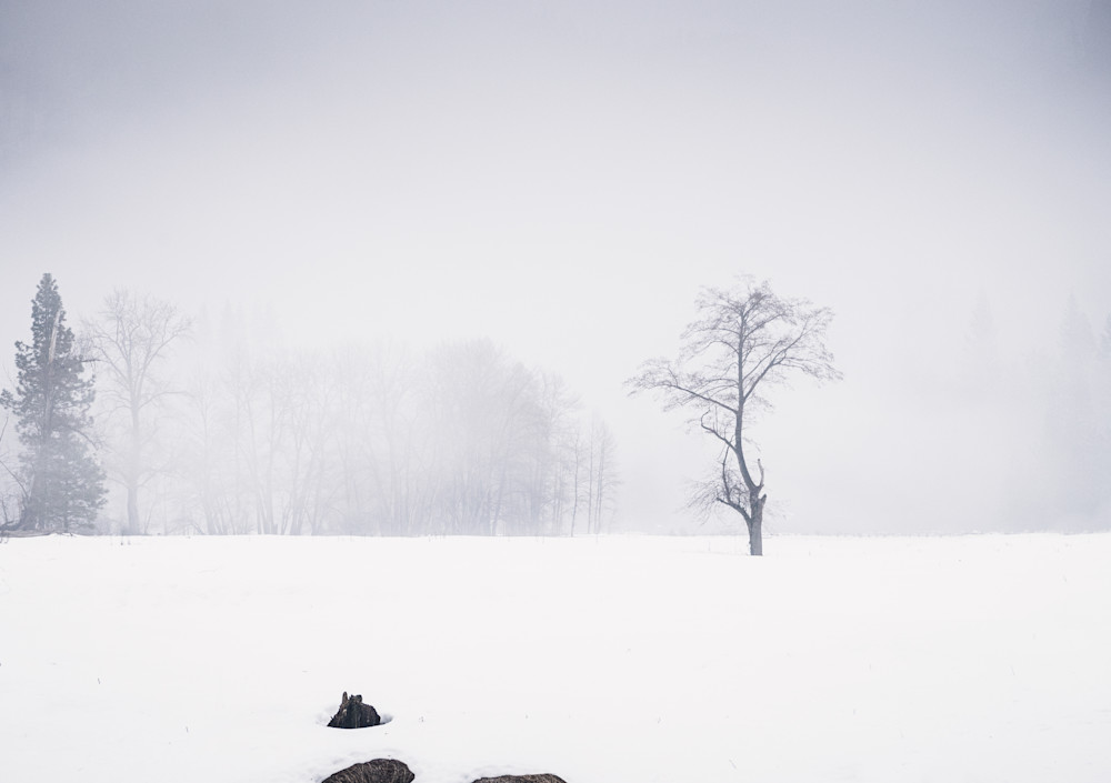 Alone In The Snow - snowy winter meadow in Yosemite photograph print