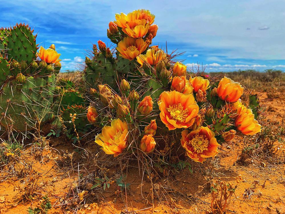 Beauty In The Desert Art | Third Shutter from the Sun Photography