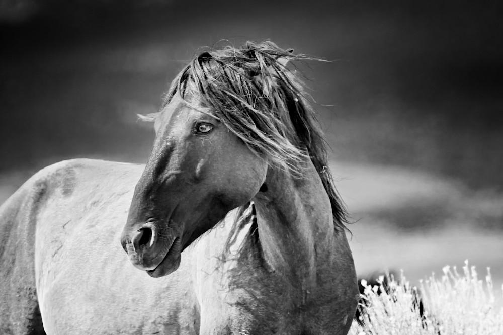 Wild Heart, A stallion with an attitude.