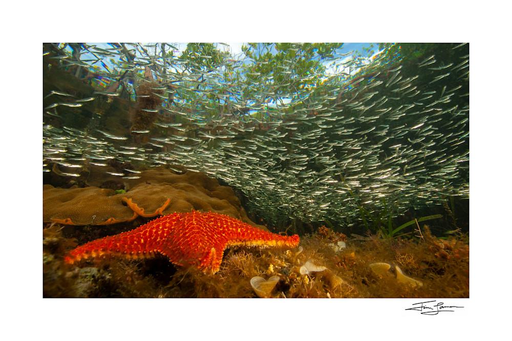Sea star under the mangroves home decor.