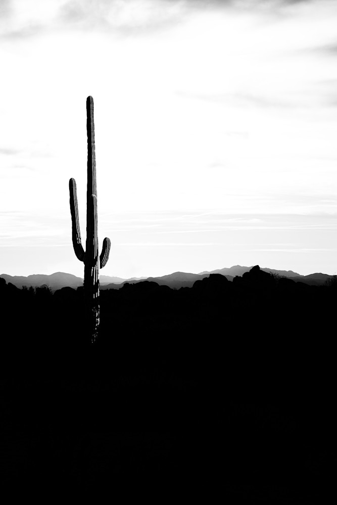Saguaro Silhouette - black and white cactus photograph print