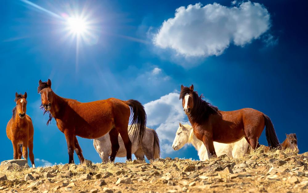 Ridgeline Wild Horses  Photography Art | Great Wildlife Photos, LLC