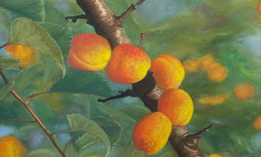 Italian Apricots Art | Kurt A. Weiser Fine Art