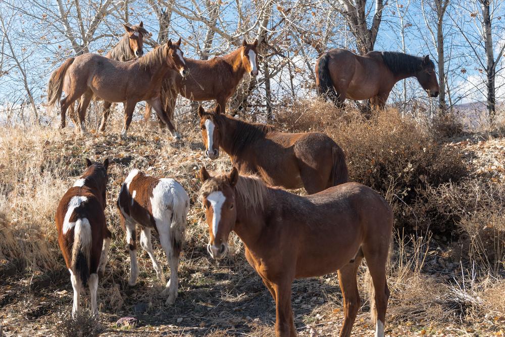 Wild Horses In Trees Photography Art   Great Wildlife Photos, LLC