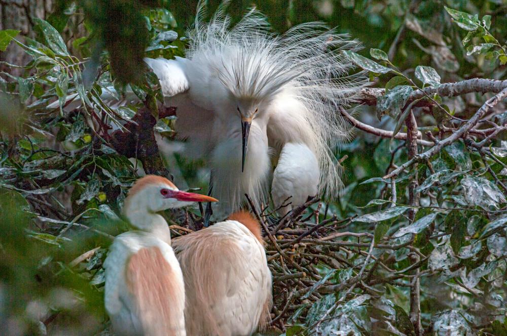 Woods Apparition Photography Art | Great Wildlife Photos, LLC