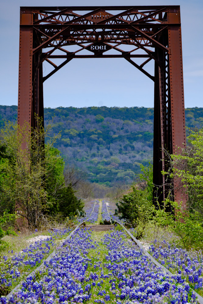 Texas Bluebonnet Bridge