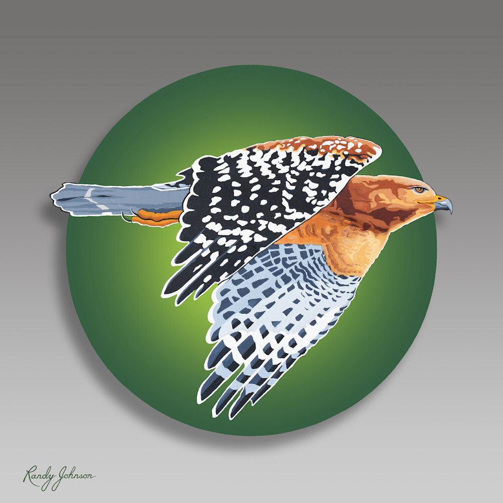 Red Shouldered Hawk Art | Randy Johnson Art and Photography