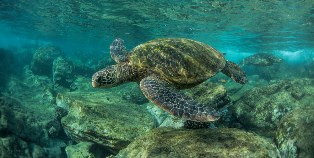 Turtles In The Bay Photography Art | Douglas Hoffman Photography