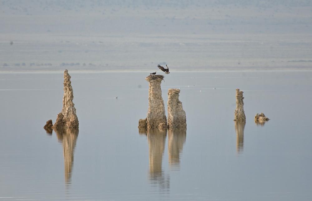 Osprey Pair With Nest In Tufa Formation Photography Art   Great Wildlife Photos, LLC