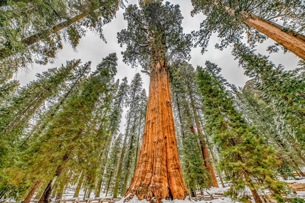 General Sherman Sequoia Art | Michael Blanchard Inspirational Photography - Crossroads Gallery