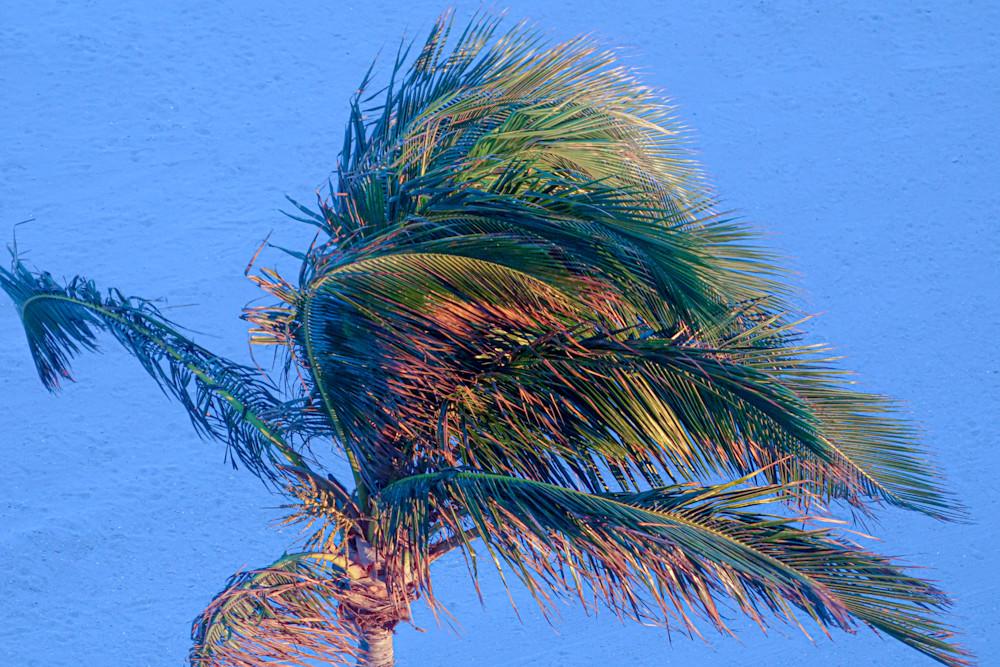 'palm' Art | Cera Arts