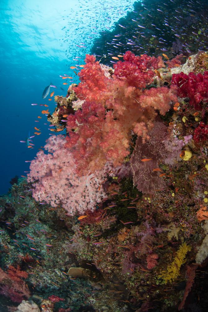 Colorful Reef Photography Art   Douglas Hoffman Photography