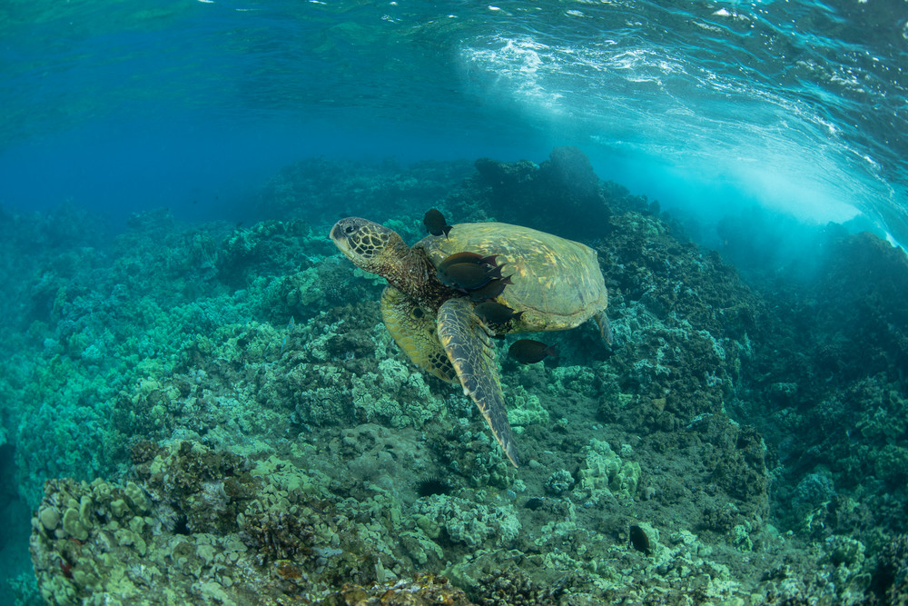 Undersea Spa Photography Art   Douglas Hoffman Photography