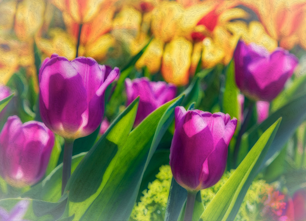 Pink Tulips and Yellow Lilys