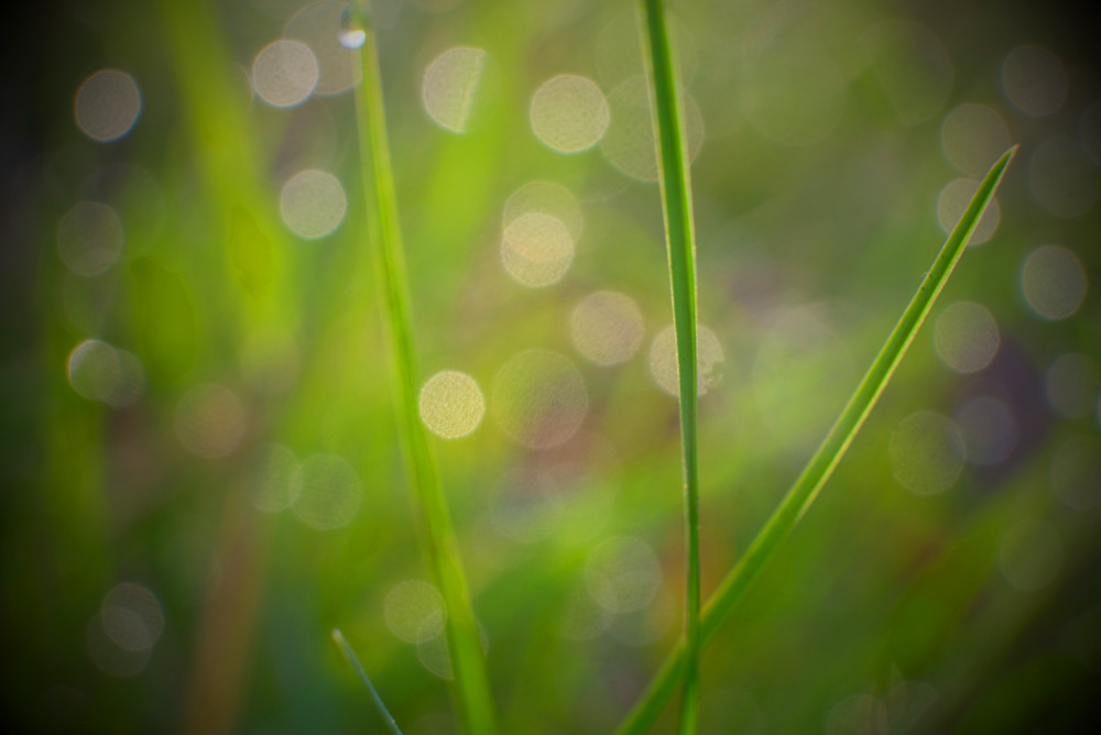 Droplets Of Light Photography Art | Silver Sun Photography