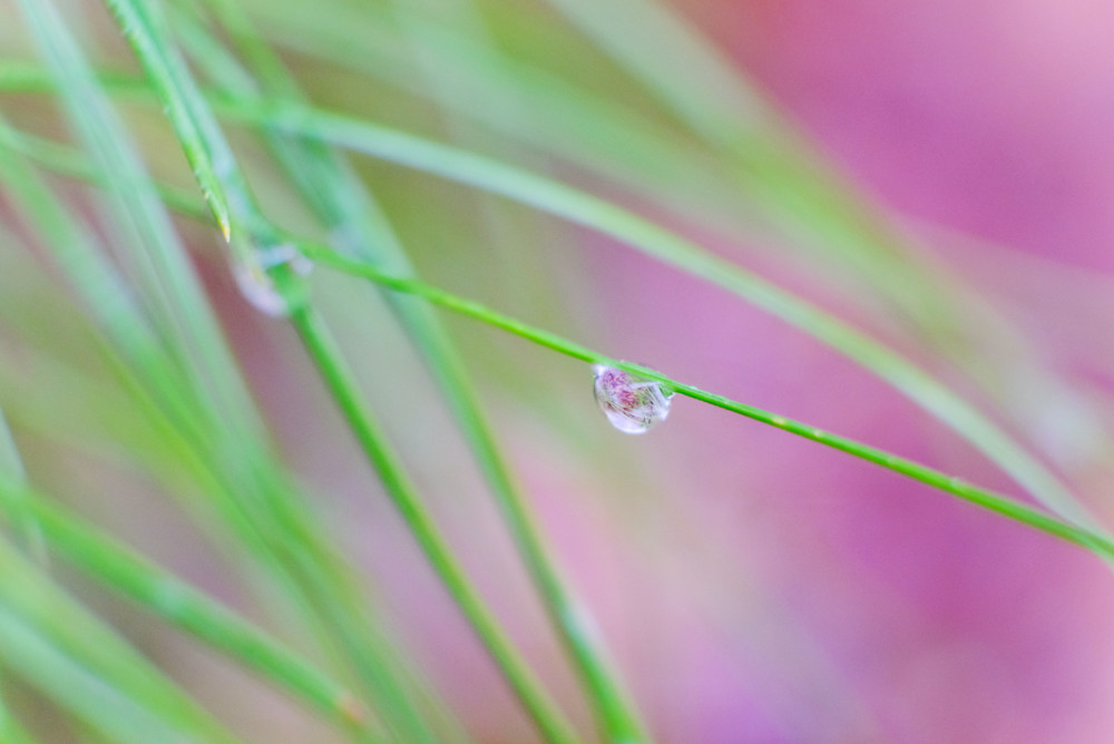Spring Droplets Photography Art | Silver Sun Photography