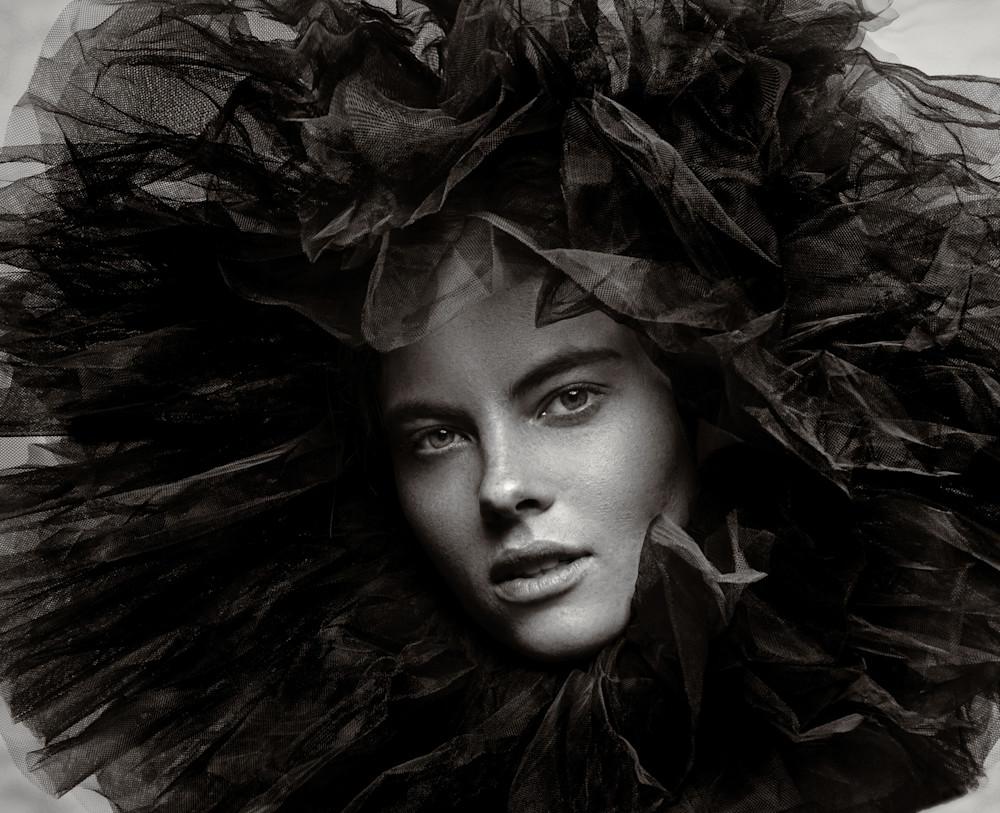 Lioness Crop Photography Art   Dan Katz, Inc.