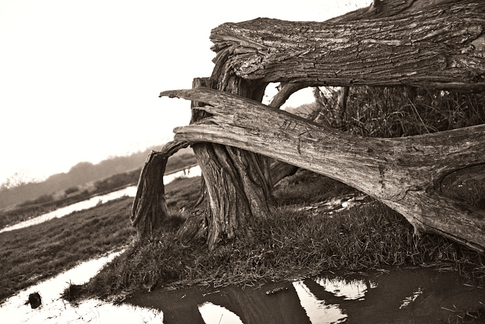 Boom! Storms Cause Damage Art   Martin Geddes Photography