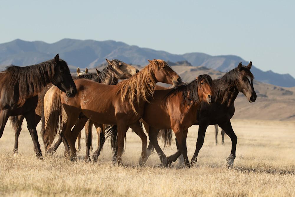 Onaqui Foal 1 Photography Art   Danehy Photography