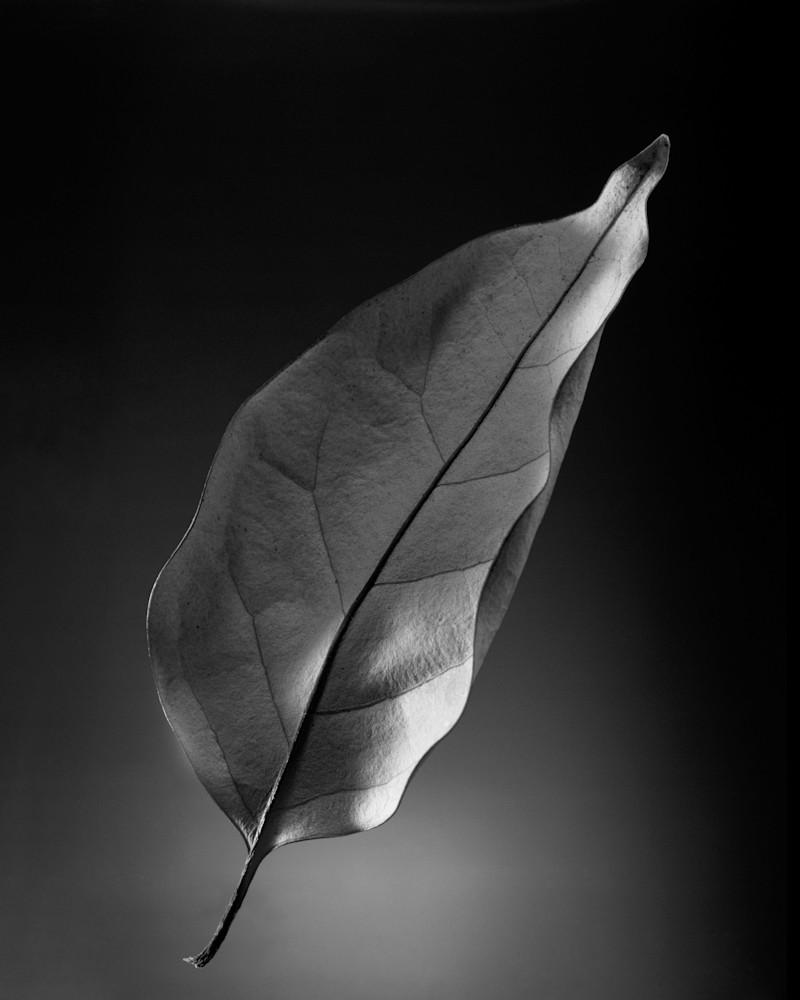 Autumn Leaf 93 B Photography Art | Rick Gardner Photography