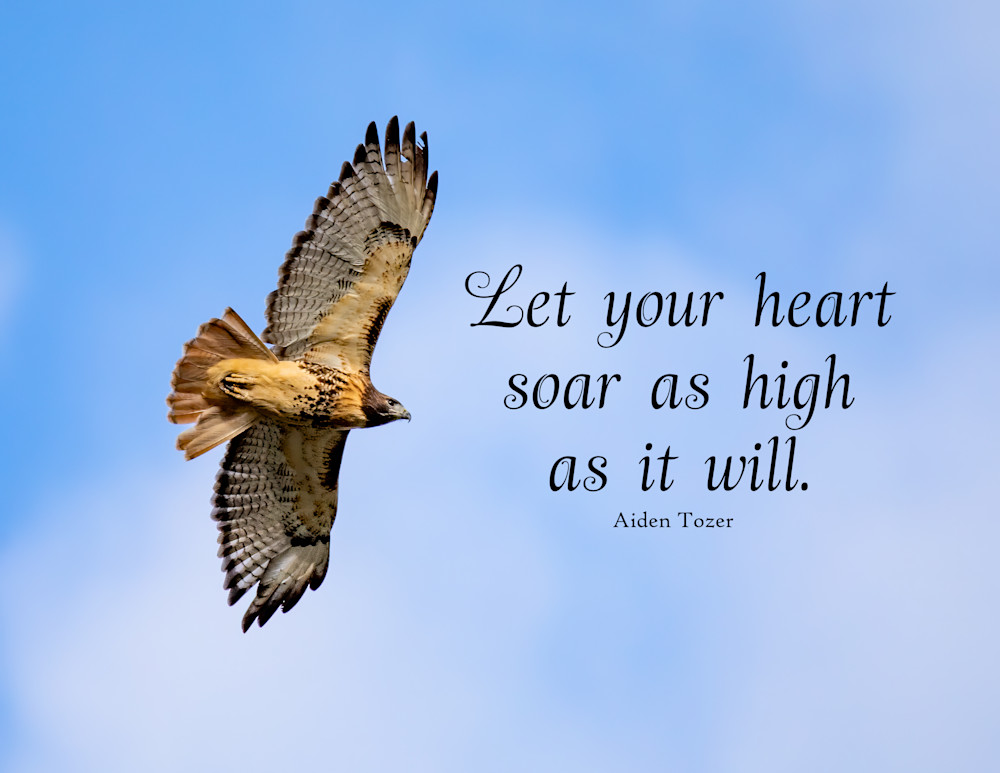 Let your heart soar as high as it will