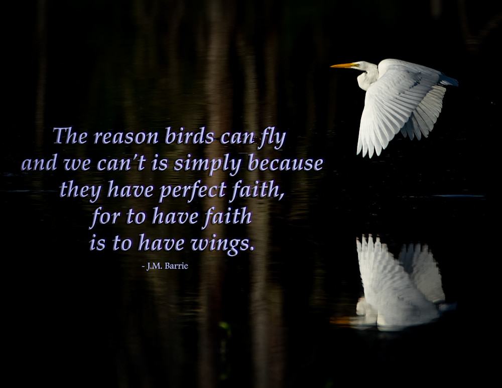 The reason birds can fly