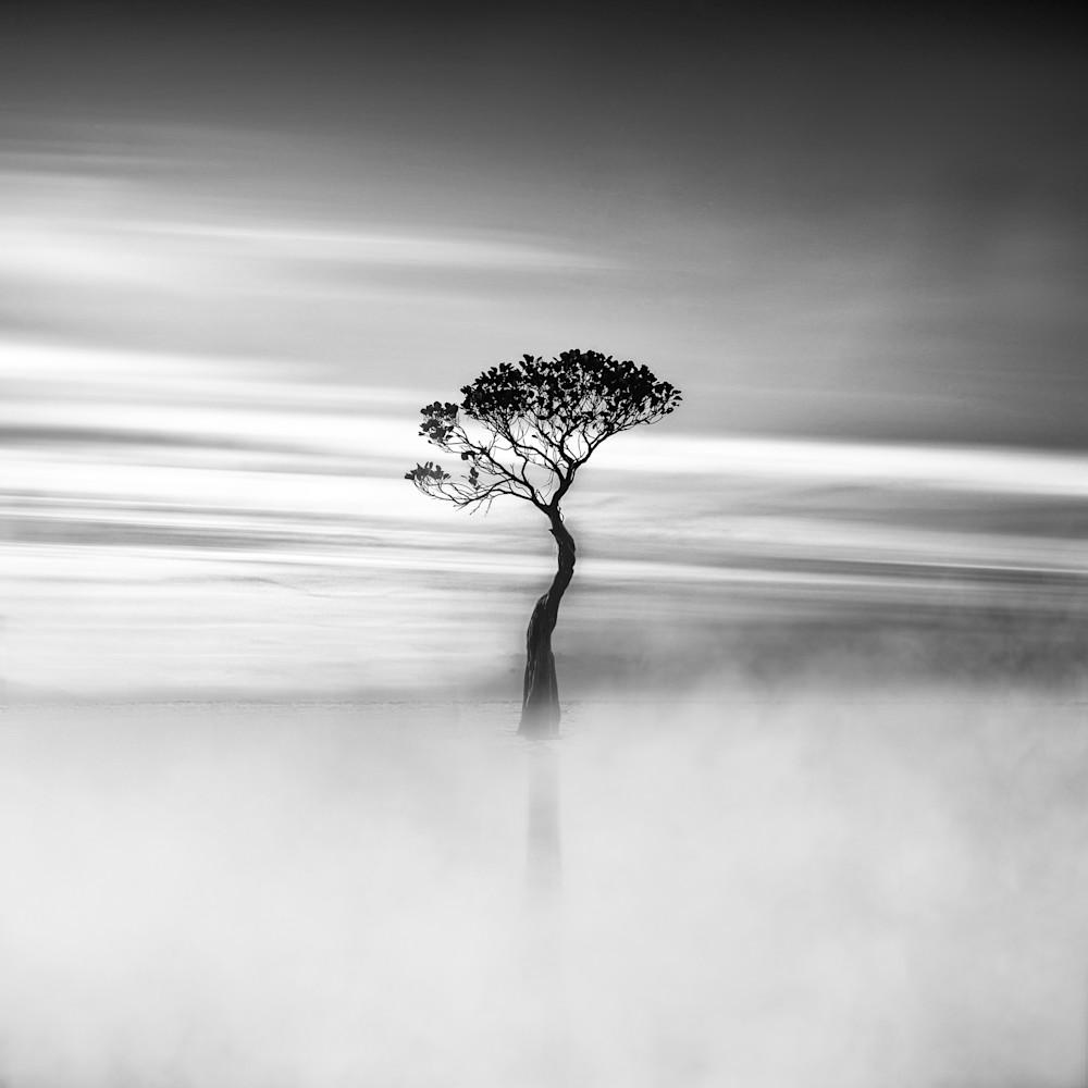 Harv Greenberg Photography - Harmony