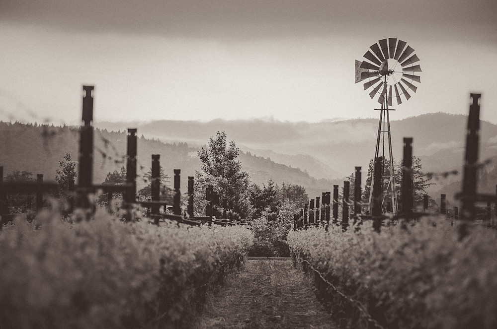 Down a vineyard row