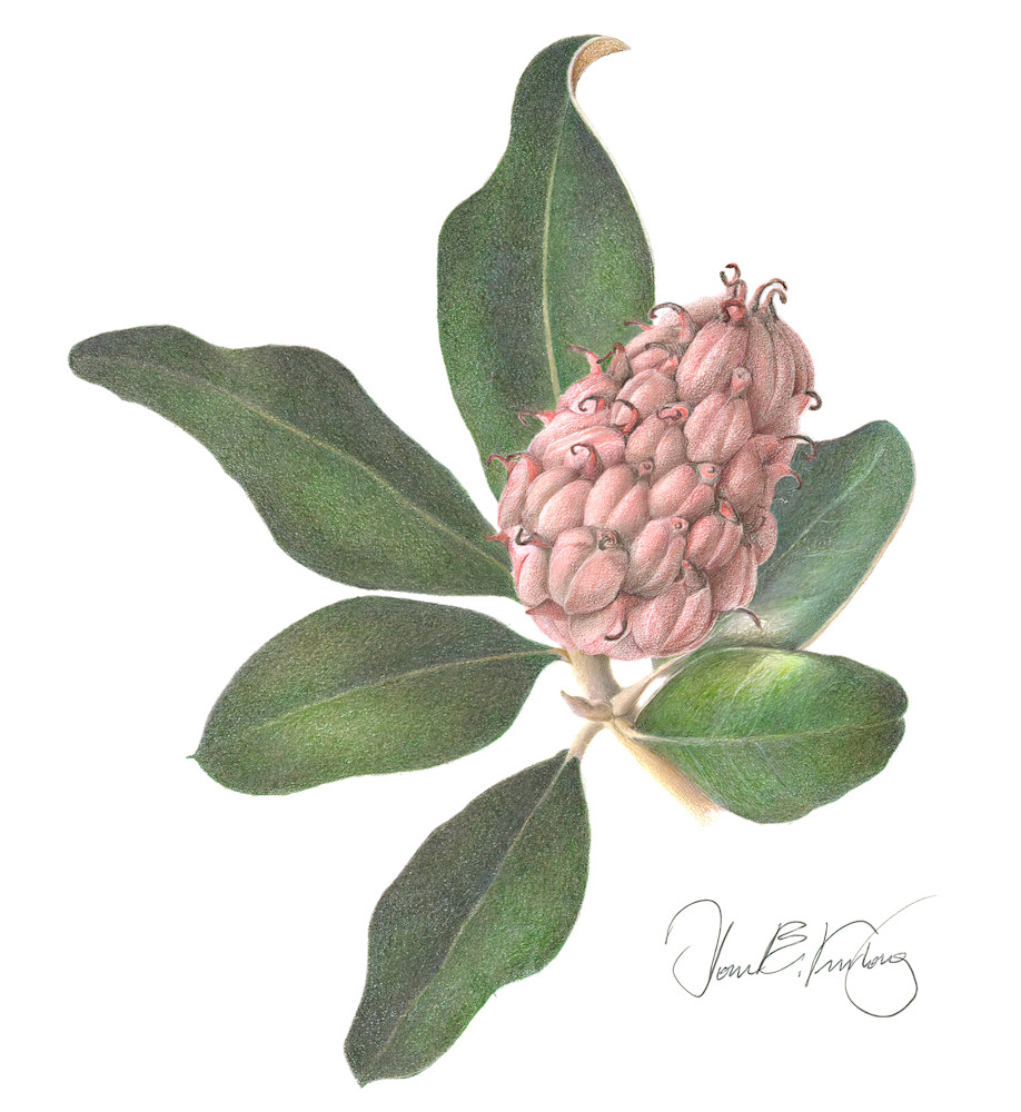 Magnolia Pod Homegoods
