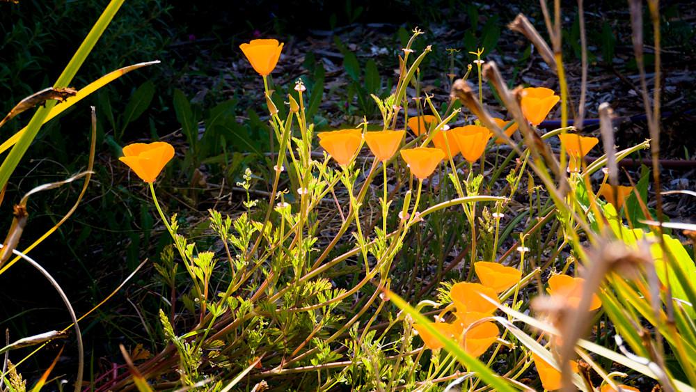 Anyone For Orange? Photography Art | Ron Olcott Photography