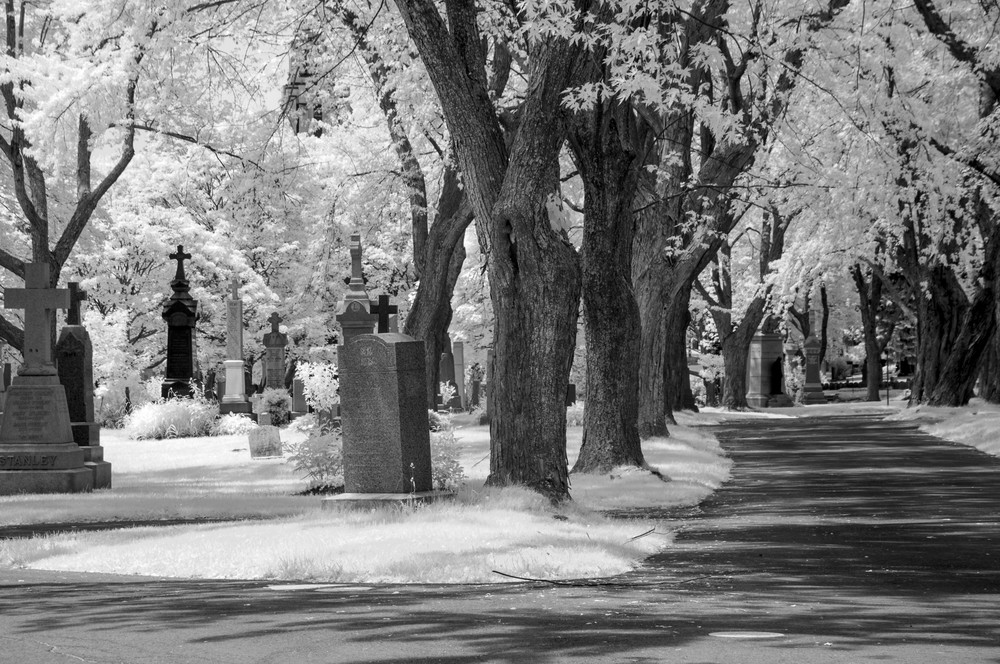Notre Dame Des Neiges Photography Art | Kathleen Messmer Photography