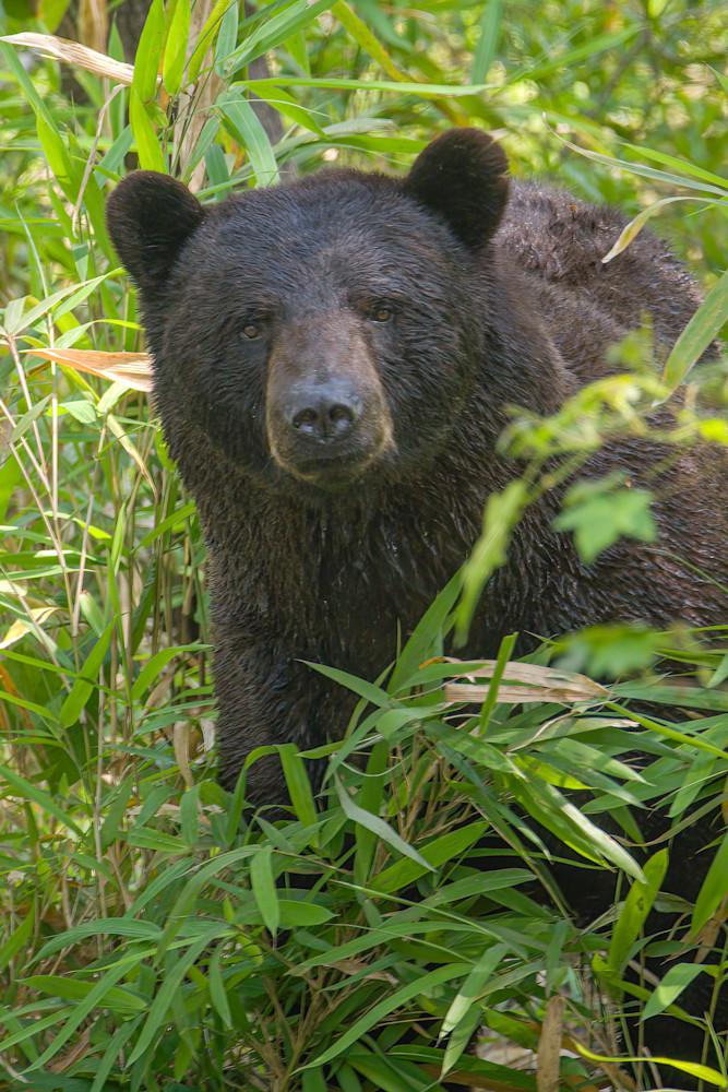 Curious Bear Photography Art | Monteux Gallery