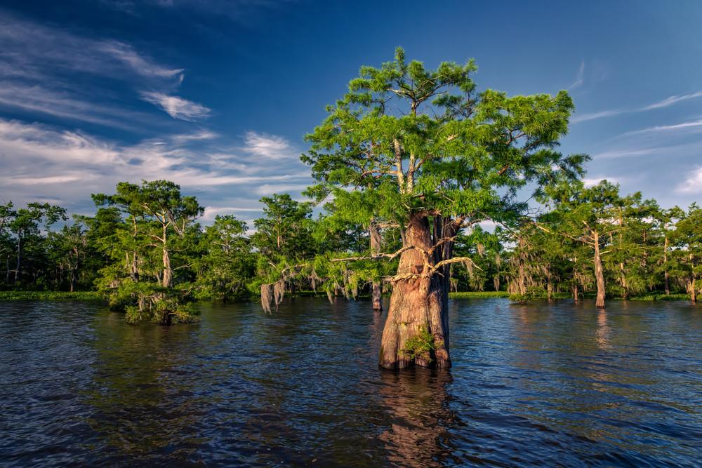 Grand View - Louisiana swamp fine-art photography prints
