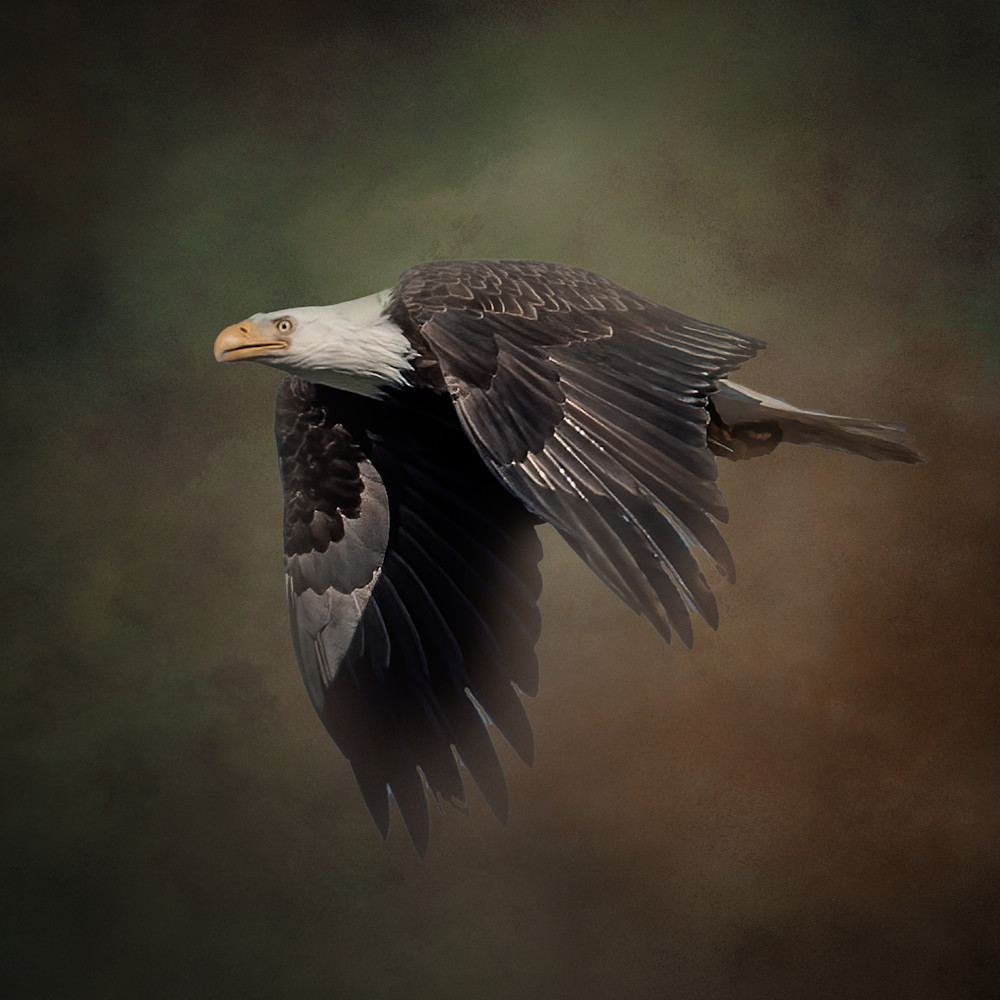 Bald Eagle on Textured Background -Square Crop