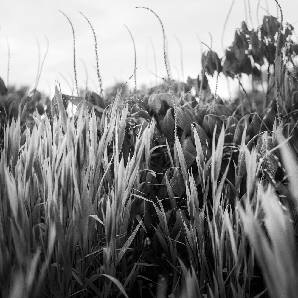 Virginia Field Photography Art   TERESA BERG PHOTOGRAPHY
