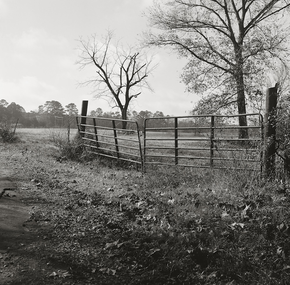 Texas Pasture Photography Art | TERESA BERG PHOTOGRAPHY