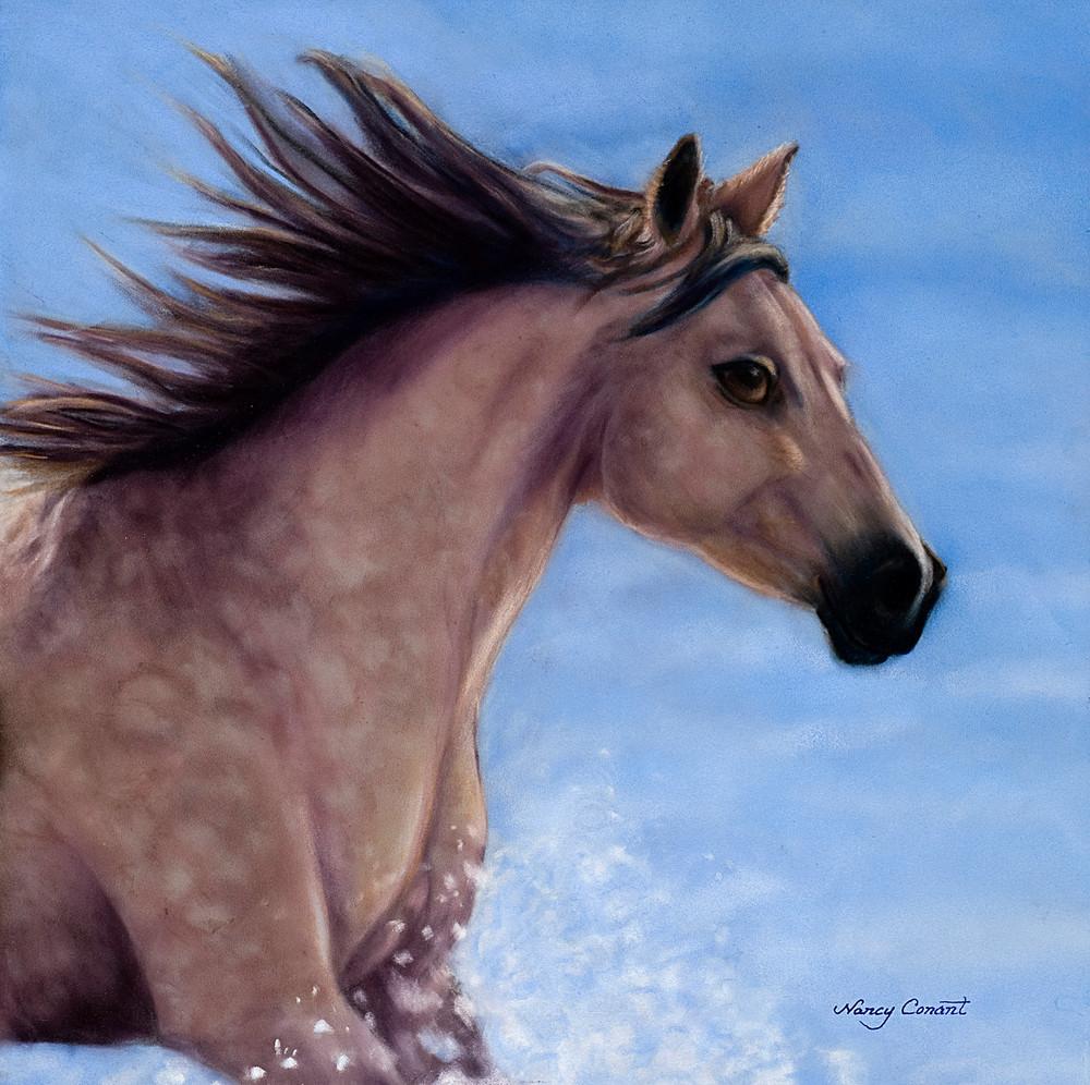 Horse running on the beach Buckskin Beauty by Nancy Conant