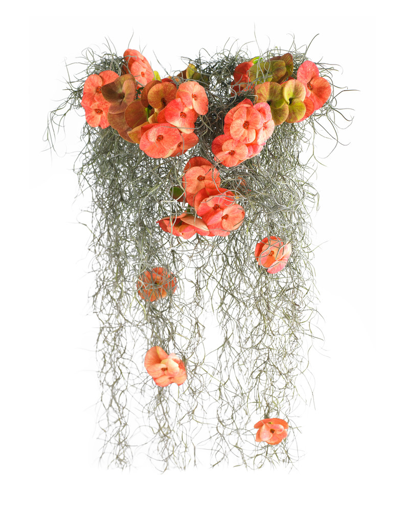 John E. Kelly Fine Art Photography – Crown of Thorns with Moss - Floral Portraits