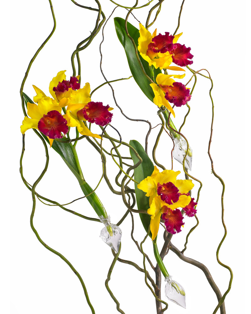 John E. Kelly Fine Art Photography – Orchids on Twigs - Floral Portraits