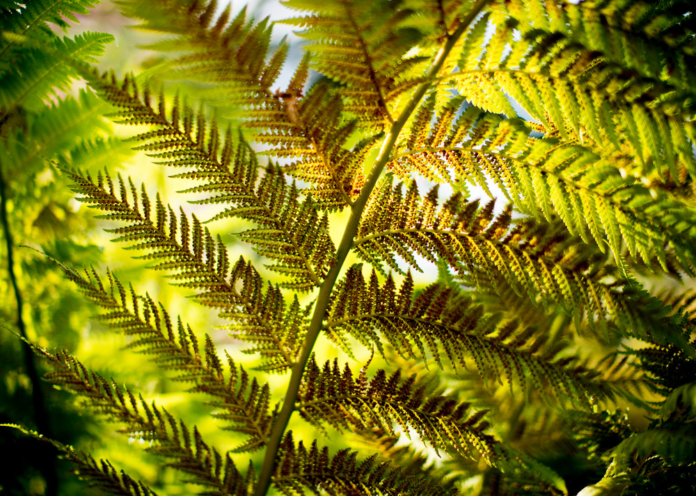 Green California fern abstract photography by Teresa Berg