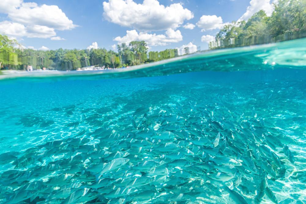 Springwater Blue Photography Art   kramkranphoto