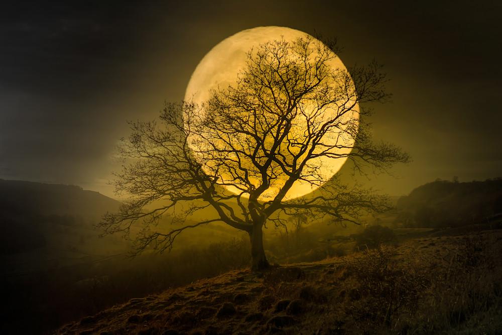 Harv Greenberg Photography - Harvest Moon