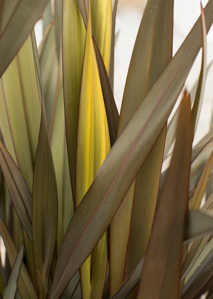 California Grass 1 Photography Art | TERESA BERG PHOTOGRAPHY