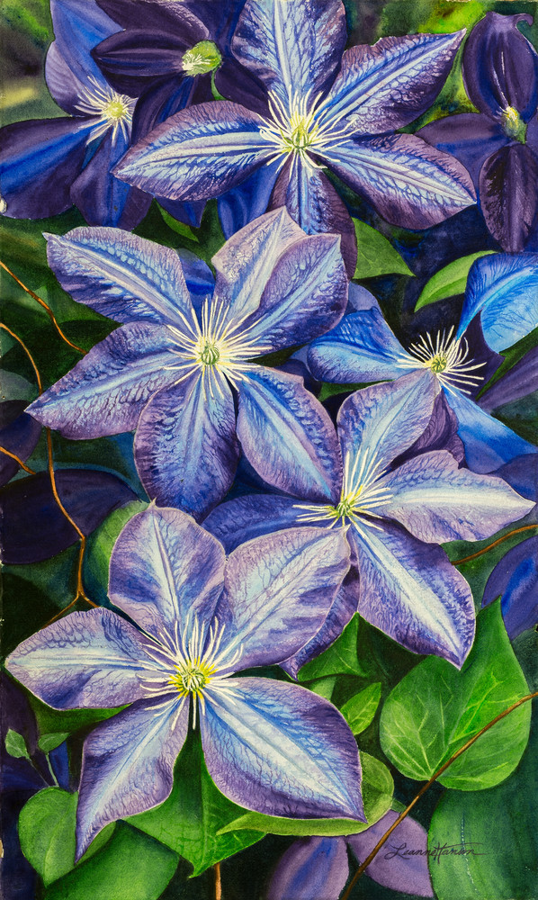 Purple Clematis Art | Leanne Hanson Art