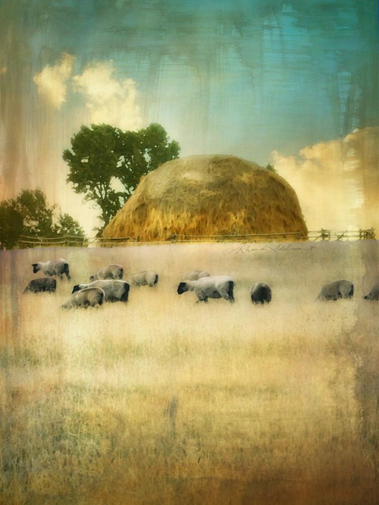 Sheep Grazing in the Golden Light Art