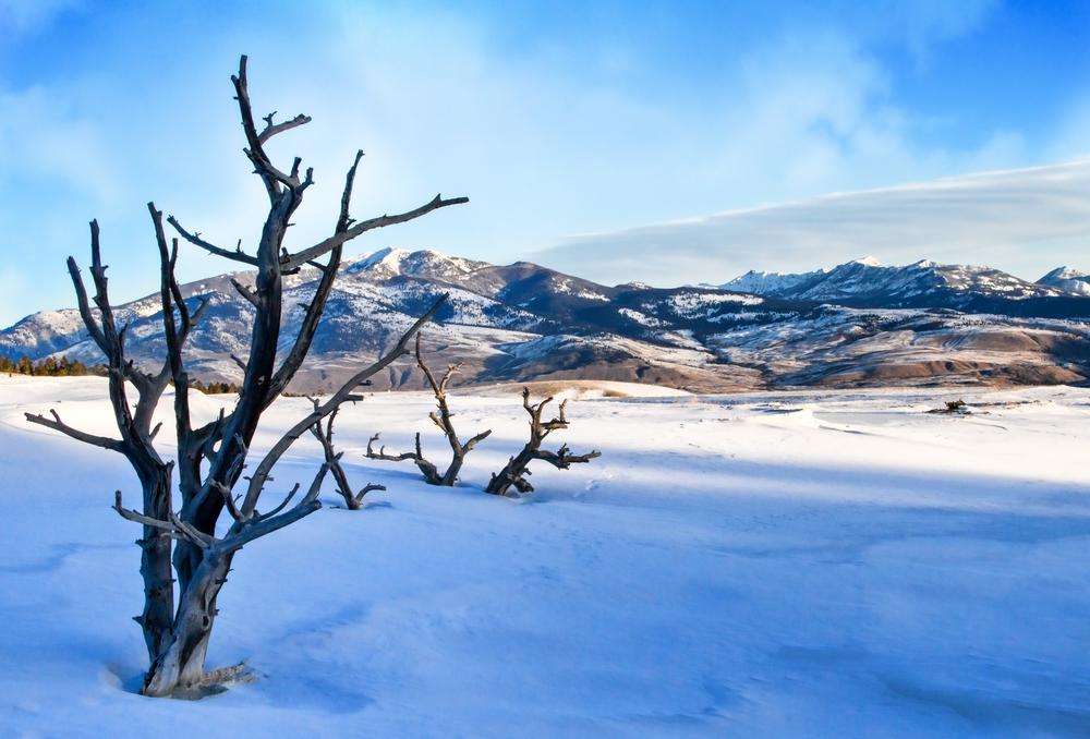 Mammoth Hot Springs Tree, Yellowstone  Photography Art | Alina Marin-Bliach Photography/alinabstudios LLC