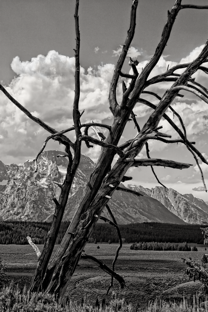 Tree Of Teton  Photography Art | Alina Marin-Bliach Photography/alinabstudios LLC