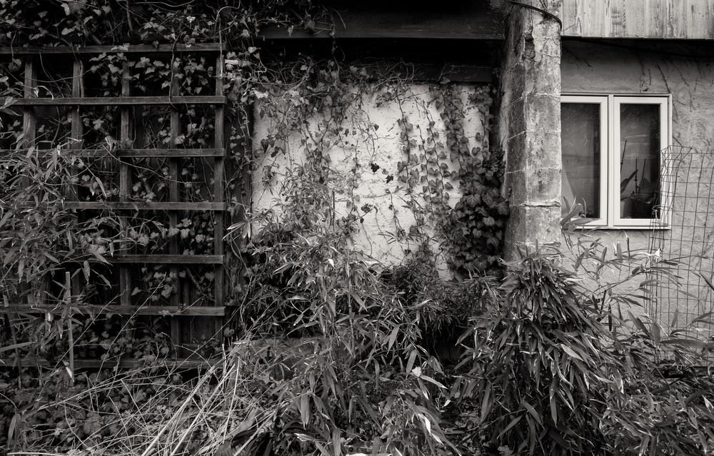 House Ivy Photography Art | Alina Marin-Bliach Photography/alinabstudios LLC