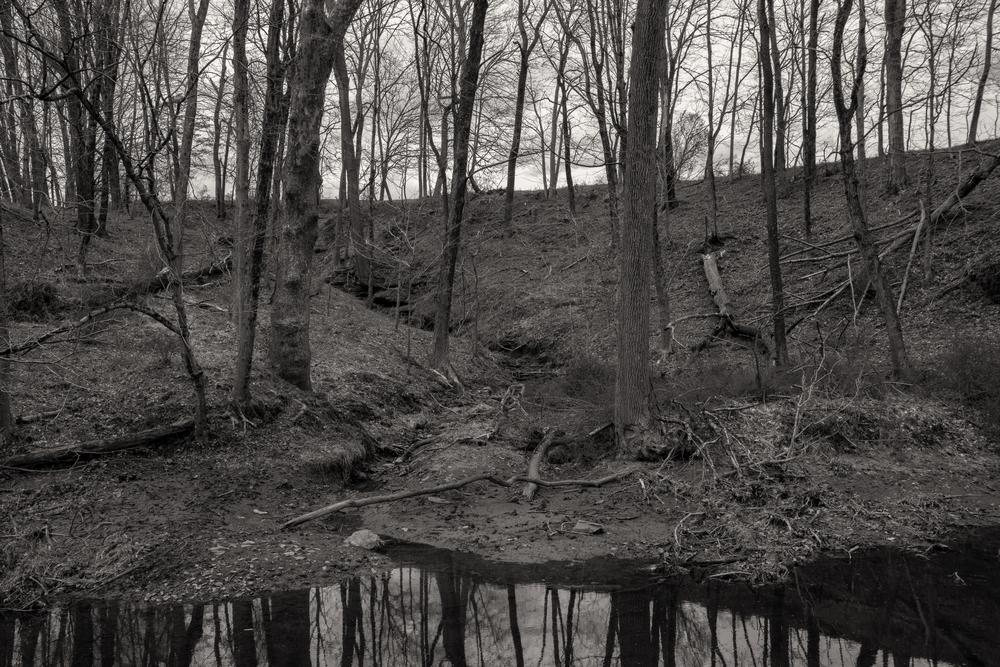 A Path Less Traveled Photography Art   Alina Marin-Bliach Photography/alinabstudios LLC