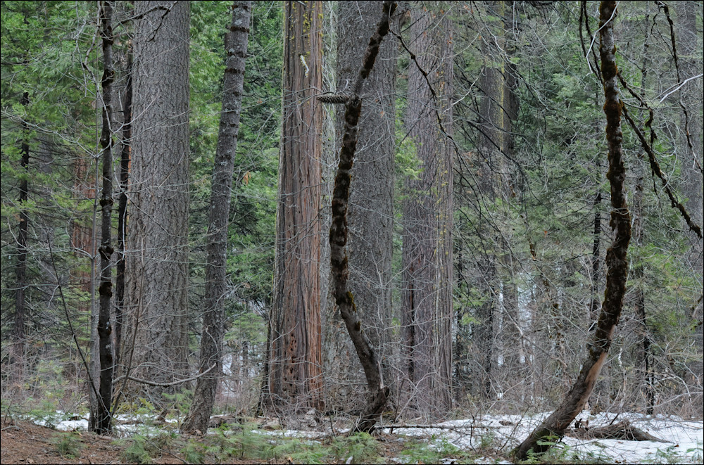 Forest And The Trees Photography Art   Ed Sancious - Stillness In Change